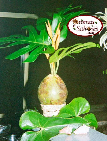 arranjotropical1